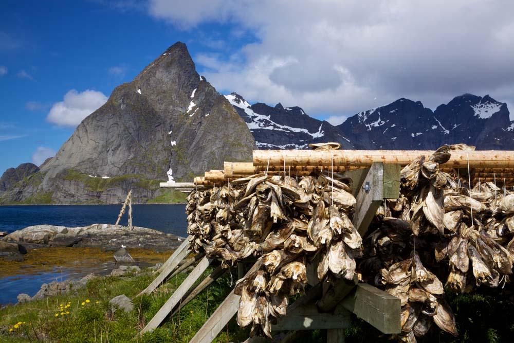 Island Trader Vacations Reviews Oslo